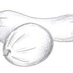 Bundeve (1)
